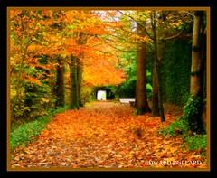 THE FAIRYTALE FOREST (Edward Dullard Photography. Kilkenny, Ireland.) Tags: autumn kilkenny ireland tree leaves forest automne landscape scenery photographic otono dullard edwarddullard societyedward