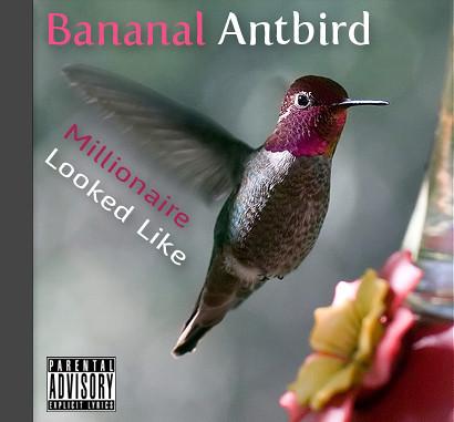 Bananal Antbird