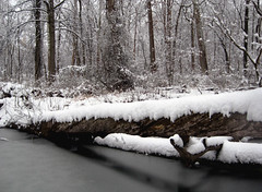tree bridge (Minkum) Tags: trees winter white snow nature virginia woods magicmoments otw supershot mywinners platinumphoto impressedbeauty runnymedepark diamondclassphotographer platinumheartaward betterthangood absolutelystunningscapes