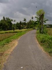 Pererenan rice fields (petersimpson117) Tags: bali pererenan umahpeter