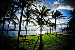 "SunRise Miami... (eyecbeauty) Tags: green beautiful sunrise miami breathtaking goldenglobe platinumheartaward naturesilhouettes clevercreativecaptures thebestshot natureselegantshots thebestpicturegallery colourvisions ""ourmasterpieces digfotopro llovemypics breathtakinggoldaward exploredbeauty today´sbest breathtakinghalloffame yourpassionawards"