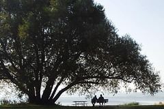 Wisdom of Trees by lepiaf.geo on Flickr