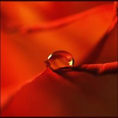 ~precious treasure (Anne Strickland) Tags: bravo waterdrop xxx 333views firstquality eow thankyoudear megashot theroadtoheaven tighthugs ~amabile~