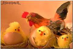 Easter is Coming ... (krisdecurtis) Tags: decorations italy canon easter interestingness interesting italia 300d campania canon300d chick ornaments 2008 soe pasqua maddaloni firstquality artisticexpression motherhen krisdecurtis