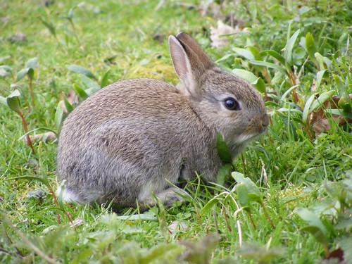 a rabbit.