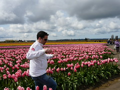 2008 tiptoe through the tulips at skagit valle...