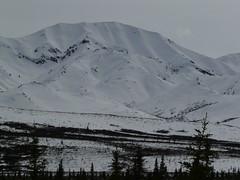 P1000064 (kartiksurbhi) Tags: mountain alaska snowcapped denali