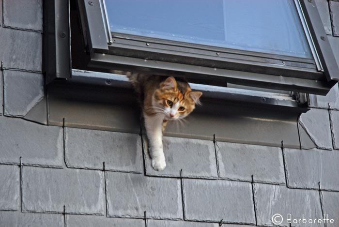 cat's-commando7