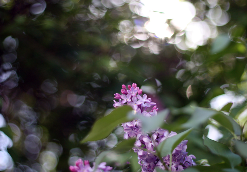 bokeh beauty