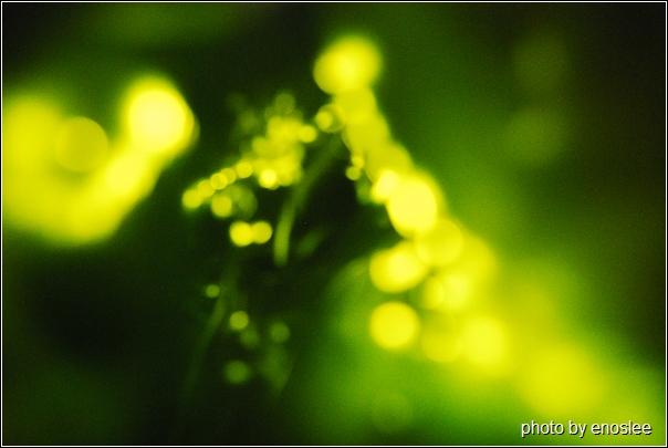 螢火蟲-02