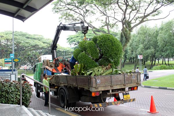Tree Planting Singapore Style