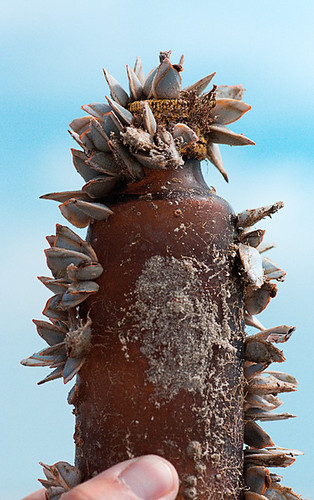 Glass Bottle With sea shells by artpaw [rebecca collins]