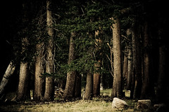The Lives of Ents (code poet) Tags: california trees tree topf25 grass topv111 rock landscape topv555 topv333 topv1111 topv999 100v10f boulder yellowstonenationalpark yellowstone topv777 trunks 28135mm tuolumnemeadows mywinners
