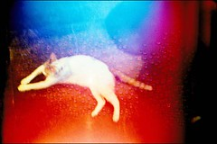 colorful cat (Freeair X Twiggy) (Twiggy Tu) Tags: blue red orange white film cat lomo lca colorful purple doubleexposure taipei 重曝抽抽樂 withfreeair ilovepeachcolor