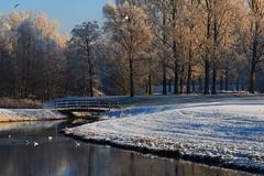 2007_12_22DSC_9840_d01 (iVOMiMiBoRE) Tags: trees winter snow holland tree netherlands nijmegen frost nederland frostedtrees winterinholland frozentrees malvert winterinthenetherlands