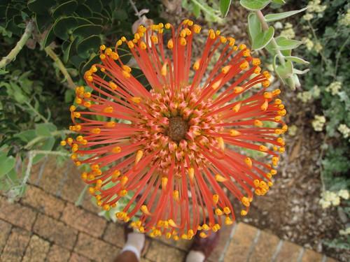 130 Botanical gardens -