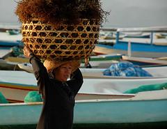 Lembongan Island (Tempo Dulu) Tags: poverty bali seaweed indonesia dailylife lembongan
