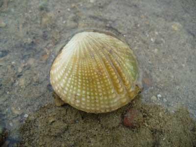 Shell-P1050659