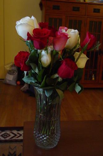 Roses Feb 08 006