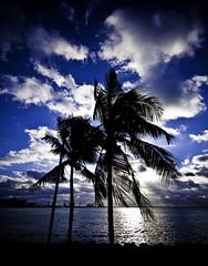 cool Miami sunrise... (eyecbeauty) Tags: blue sunrise miami palmtree breathtaking theblues goldenglobe blueribbonwinner photographyrocks qualitypixels mostbeautifulpictures flickrunitedaward today´sbest favtop35