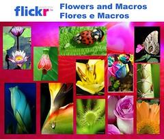 Flickr Flores e Macros