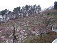 KICX5086 (jy4to) Tags: hiyoshi chichibu nagatoro