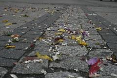 Po procesji (elusja) Tags: kwiaty boeciao chodnik patki e1usya uroczystociaaikrwipaskiej