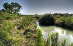 Black River at Davis (JoelDeluxe) Tags: autostitch fish never newmexico water birds creek spring stream desert insects oasis blackriver ive species someplace nm mussel joeldeluxe amphibians carlsbad habitat pure seen clam