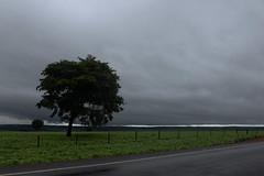 rvore da beira da estrada (Aszuos) Tags: road cloud tree verde green rain clouds canon chuva estrada nublado rvore soja nvem plantao t1i soybeanplanting
