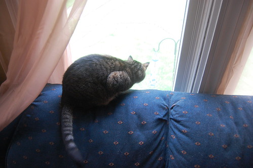 at the window