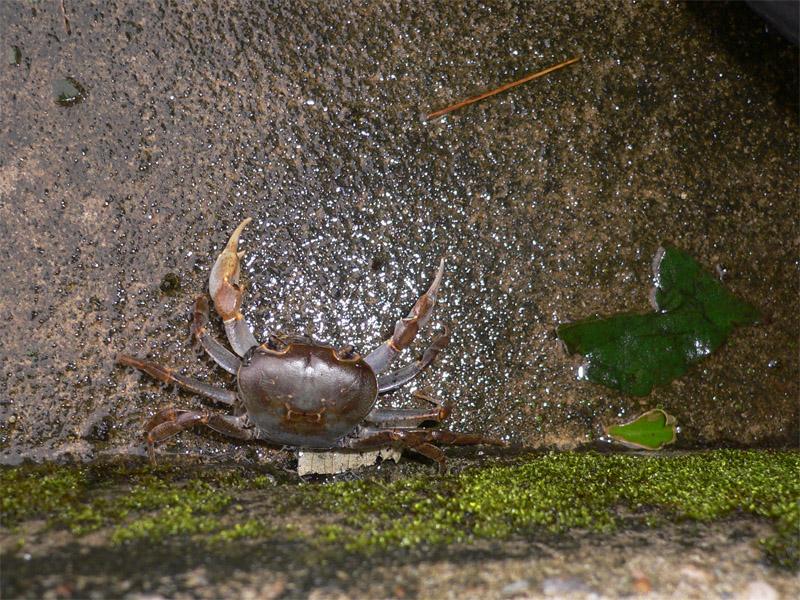 MCU-Crab-20071009-2