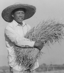 Filipino farmer (homebodyhubby) Tags: rice filipino farmer