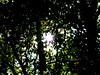 Sun Breaking Through The Canopy (mightyquinninwky) Tags: autumn trees sun sunlight fall pod woods october kentucky award pow sunrays invite westernkentucky ohioriverbottoms ohiorivervalley onlythebest superbmasterpiece hendersoncountykentucky 1on1naturephotooftheweek 1on1naturephotooftheweekoctober2007 banksoftheohioriver jasonpresser 11223344556677 bestofformyspacestation