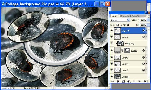 Semi-processed Collage Background Picture with 1 vector-shaped bug and 5 smaller cropped images