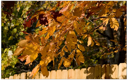 Fall leaves BackYard