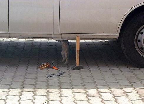 Gato Mecanico