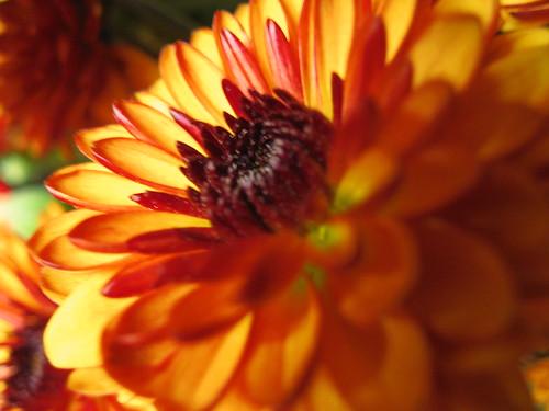 Ubiquitous Flower Photo
