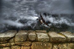 Caracara takes off (wili_hybrid) Tags: trip travel autumn vacation holiday mountains bird art fall peru nature birds animal animals rock clouds landscape geotagged outside outdoors photography photo yahoo high nikon october ruins flickr day exterior dynamic photos outdoor hawk flight picture dramatic pic journey andes wikipedia imaging machupicchu drama mapping range tone hdr hdri 2007 caracara coolclouds photomatix nikond200 tonemapped tonemapping highdynamicrangeimaging mountaincaracara year2007 theoriginalgoldseal