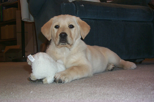 012702_01_new_puppy_with_stuffed_toy