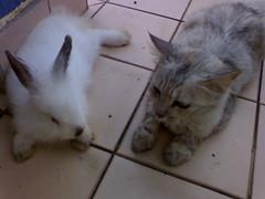 ninie & konty