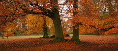 Autumn Trio (Andrew Hounslea) Tags: autumn trees tree fall leaves nikon autumncolours nikkor vr dx 18200vr d80 platinumphoto afsdxvrzoomnikkor18200mmf35~56gifed andrewhounslea favouritemonth