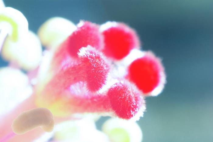 3:1下的花粉微觀世界,圖多