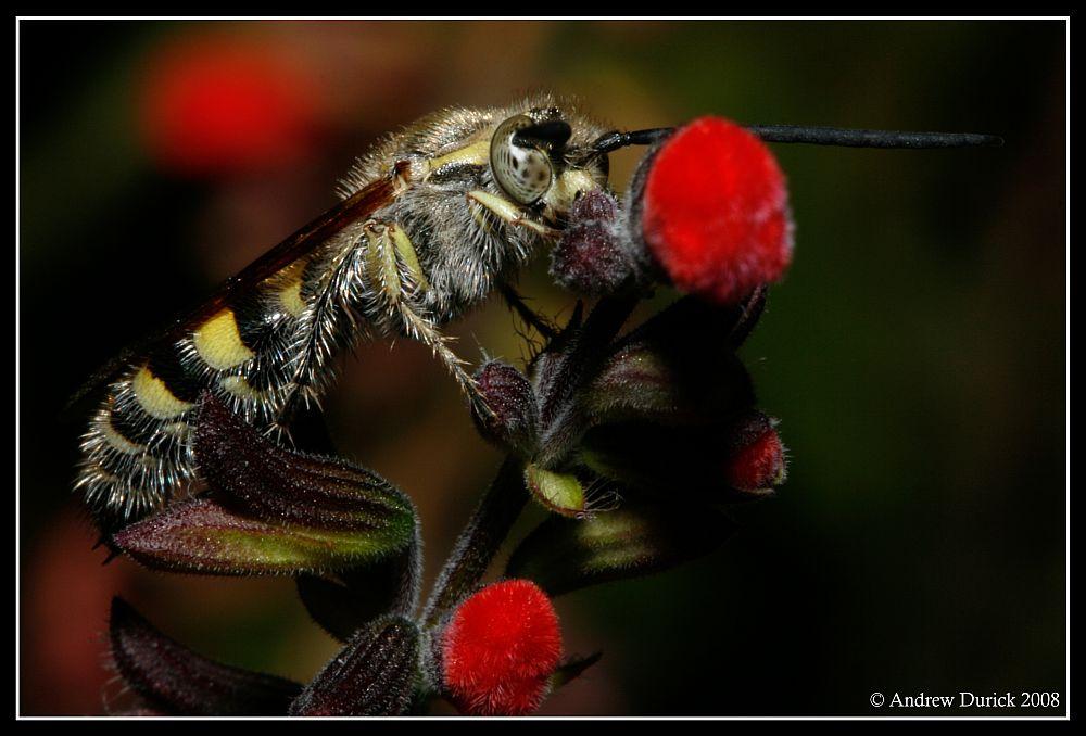 IMAGE: http://farm3.static.flickr.com/2120/2335186002_37a32c0c16_o.jpg