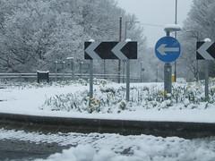 Surrey Snow #5