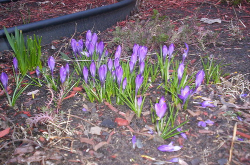 Spring Break 08 013