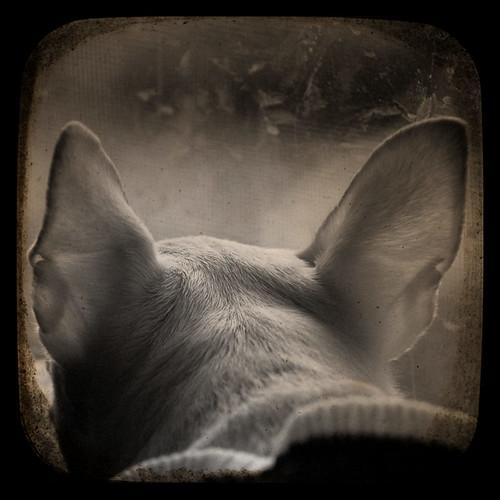 Ears #4