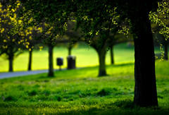 A Warm Green Evening (tripowski) Tags: park tree green london grass leaves yellow spring nikon bokeh path camden hill nikkor primrosehill 70200 chalkfarm d80 70200vr