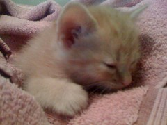 Curtis Sleeps!