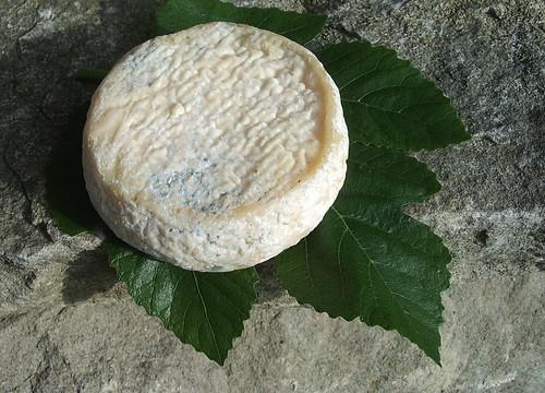 Pigouille des Charentes