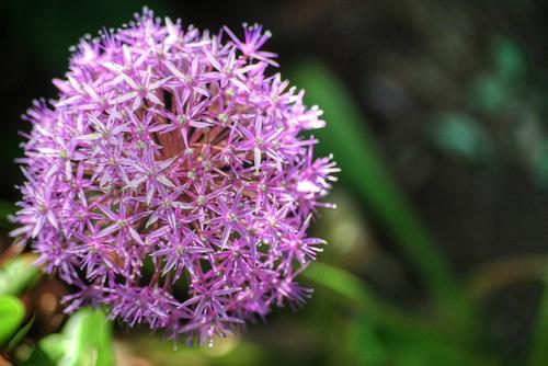 Something-flower